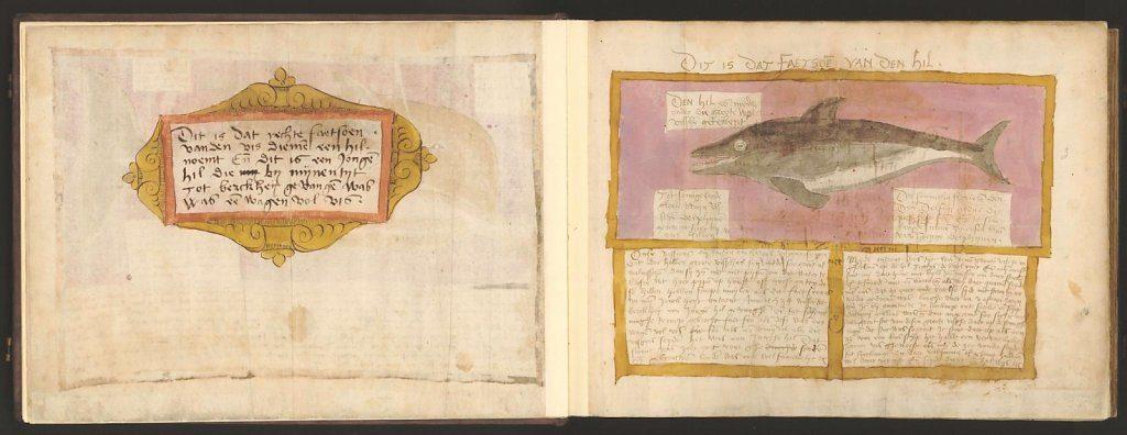 whale-book-coenensz-adriaen-p7.jpg