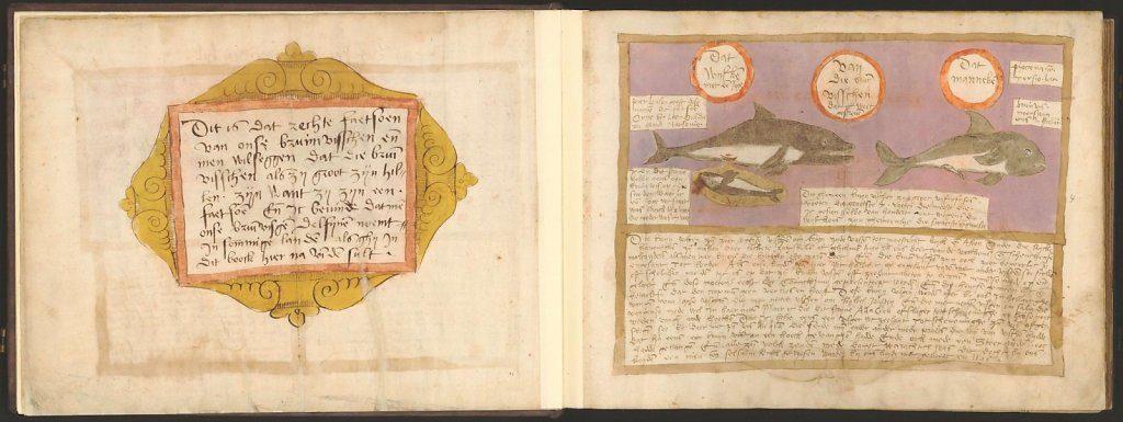 whale-book-coenensz-adriaen-p8.jpg