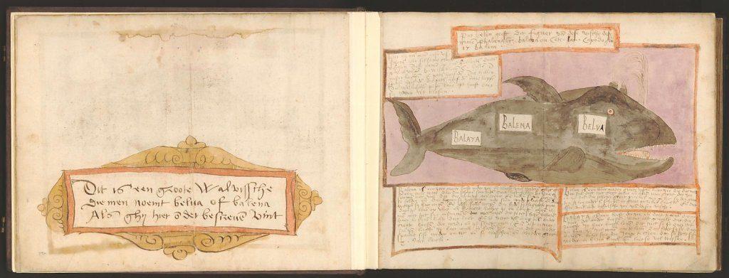 whale-book-coenensz-adriaen-p11.jpg