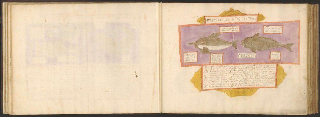 whale-book-coenensz-adriaen-p34.jpg