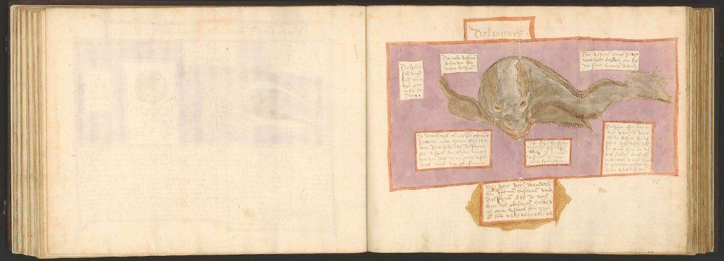 whale-book-coenensz-adriaen-p52.jpg